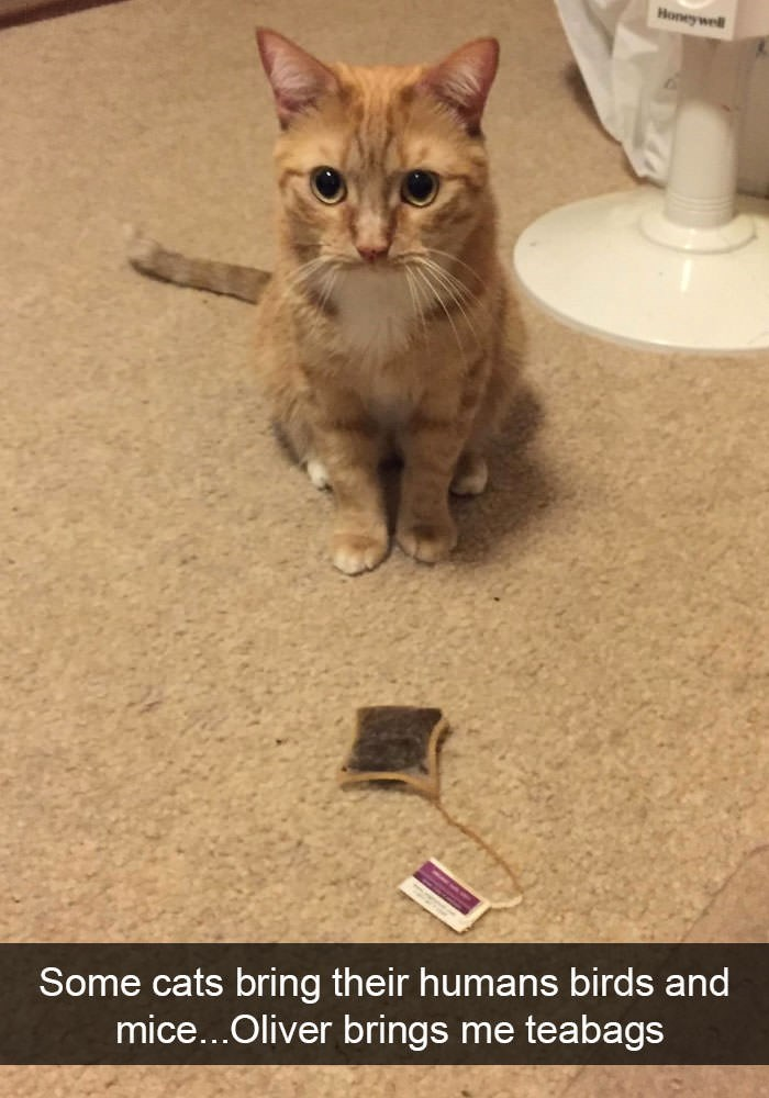 Cat - Honeywell Some cats bring their humans birds and mice...Oliver brings me teabags