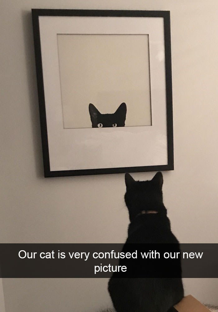 Picture frame - Our cat is very confused with our new picture