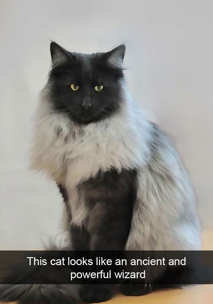Cat - This cat looks like an ancient and powerful wizard