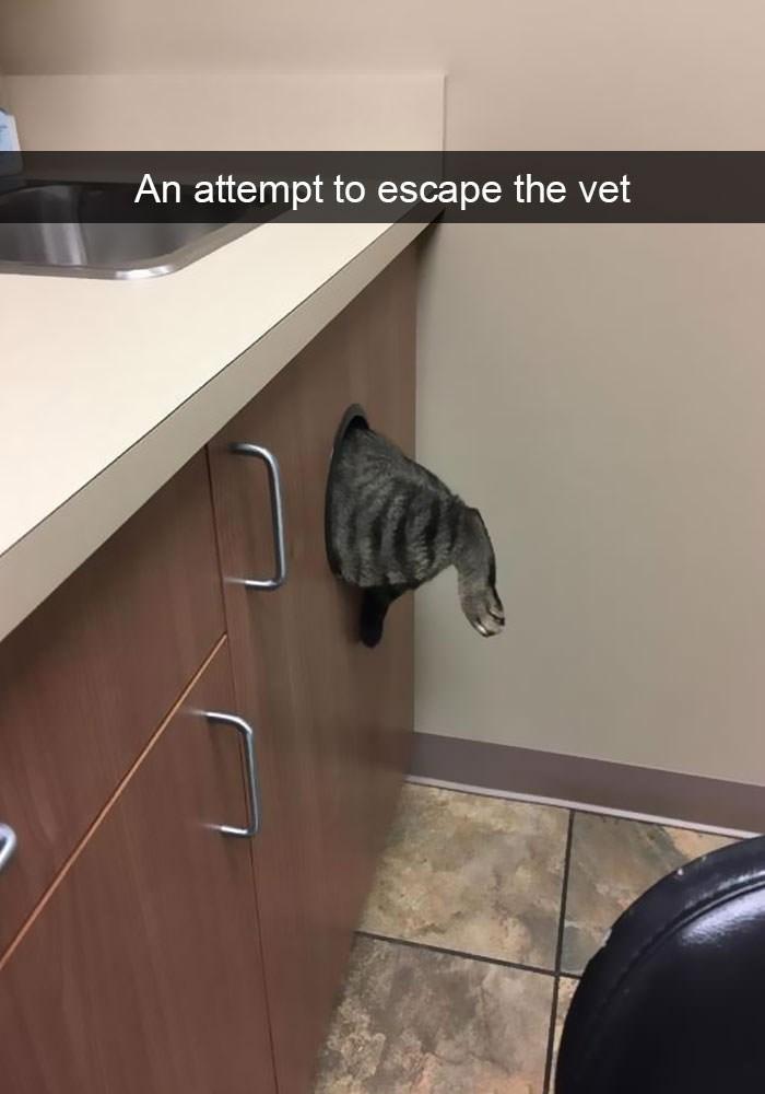Cat - An attempt to escape the vet