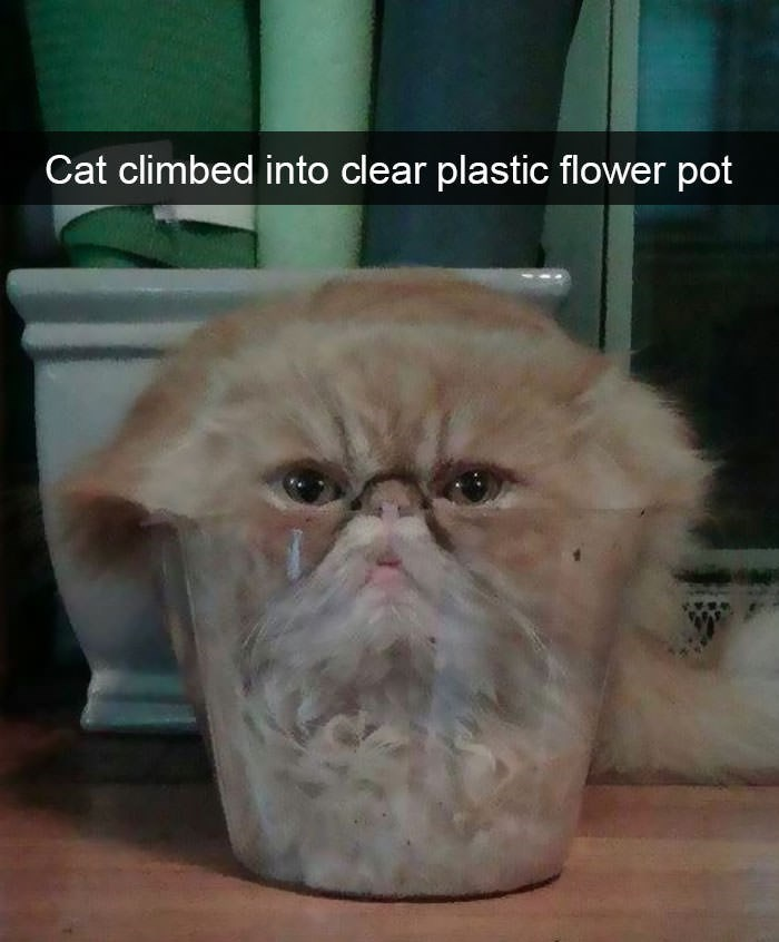 Glasses - Cat climbed into clear plastic flower pot