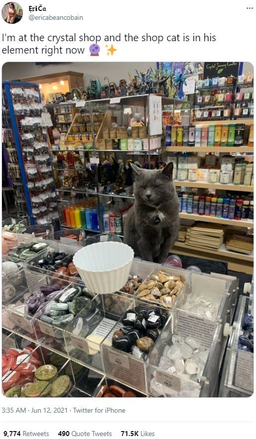Product - Eriča ... @ericabeancobain I'm at the crystal shop and the shop cat is in his element right now 3:35 AM Jun 12, 2021 - Twitter for iPhone 9,774 Retweets 490 Quote Tweets 71.5K Likes