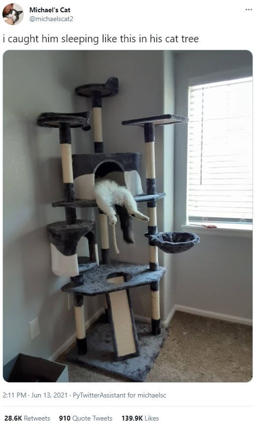 Exercise machine - Michael's Cat ... @michaelscat2 i caught him sleeping like this in his cat tree 2:11 PM Jun 13, 2021 · PyTwitterAssistant for michaelsc 28.6K Retweets 910 Quote Tweets 139.9K Likes