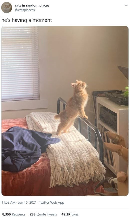 Furniture - cats in random places @catsplacess he's having a moment 11:02 AM Jun 15, 2021 Twitter Web App 8,355 Retweets 233 Quote Tweets 49.3K Likes