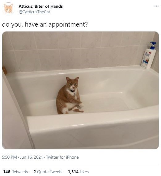 Cat - Atticus: Biter of Hands ... @CatticusTheCat do you, have an appointment? 5:50 PM - Jun 16, 2021 - Twitter for iPhone 146 Retweets 2 Quote Tweets 1,314 Likes