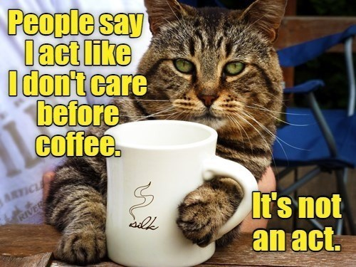 Cat - People say lact like Idon't care before coffee. ARTICLE It's not an act. RIVER