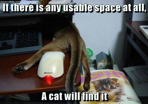 Cat - funnycatsite.com If there is any usable space at all, Microsoft A cat will find it