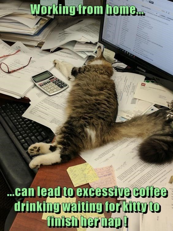 Cat - Working from home. 19000 .can lead to excessive coffee drinking waiting for kitty to finish hernap!