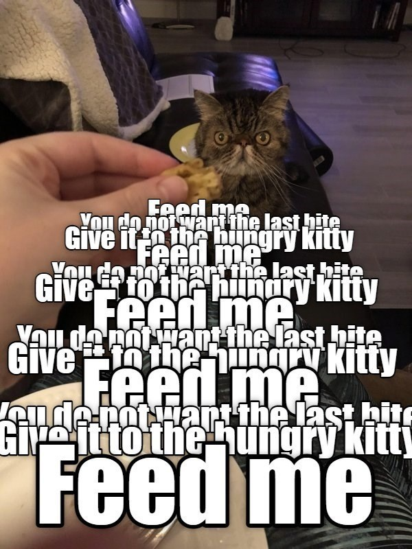 Human - Gi ot hunghite MLS Feed me You do not wart the last hite Give it ihe hingry kitty Feed me Emtertthe last hite Giveto thhinary kitty You Feen me You danot Hant the last hite Give n theungry kitty Feed me Ieude rotuart the last bite Gipeitto the ungry kitt Feed me