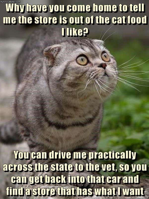 Head - funnycatsite.com Why have you come home to tell me the store is out of the cat food Ilike? You can drive me practically across the state to the vet, so you can get back into that car and find a store that has what I want