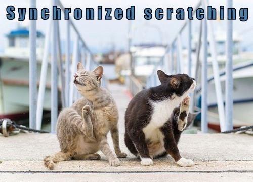 Cat - Syncbronized seratching