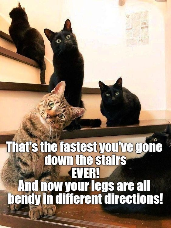 Cat - That's the fastest you've gone down the stairs EVER! And now your legs are all bendy in different directions!