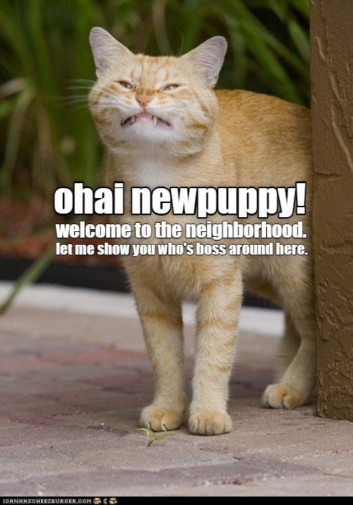Cat - ohai newpuppy! welcome to the neighborhood. let me show you who's boss around here. ICANHASCHEEZBURGER.COM