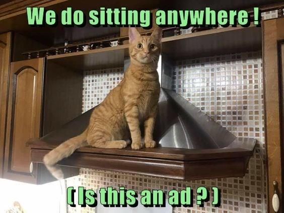 Cat - We do sitting anywhere! (Isthis anad?I