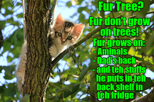 Cat - Fur Tree? Fur don'tgrow, on trees! Furgrows on: - Aminals -Dad's back -and teh stuffs he puts in teh back shelf in teh fridge