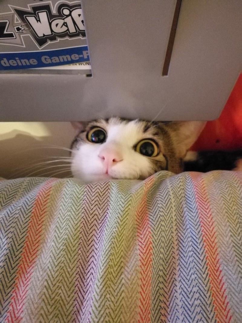 Cat - deine Game-F INOMN