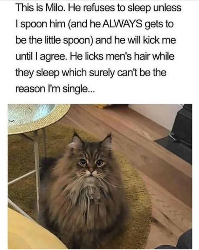 Cat - This is Milo. He refuses to sleep unless I spoon him (and he ALWAYS gets to be the little spoon) and he will kick me until I agree. He licks men's hair while they sleep which surely can't be the reason I'm single...