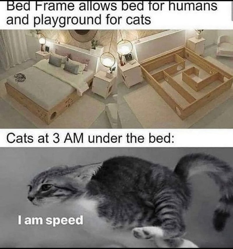 Photograph - Bed Frame allows bed for humans and playground for cats Cats at 3 AM under the bed: I am speed