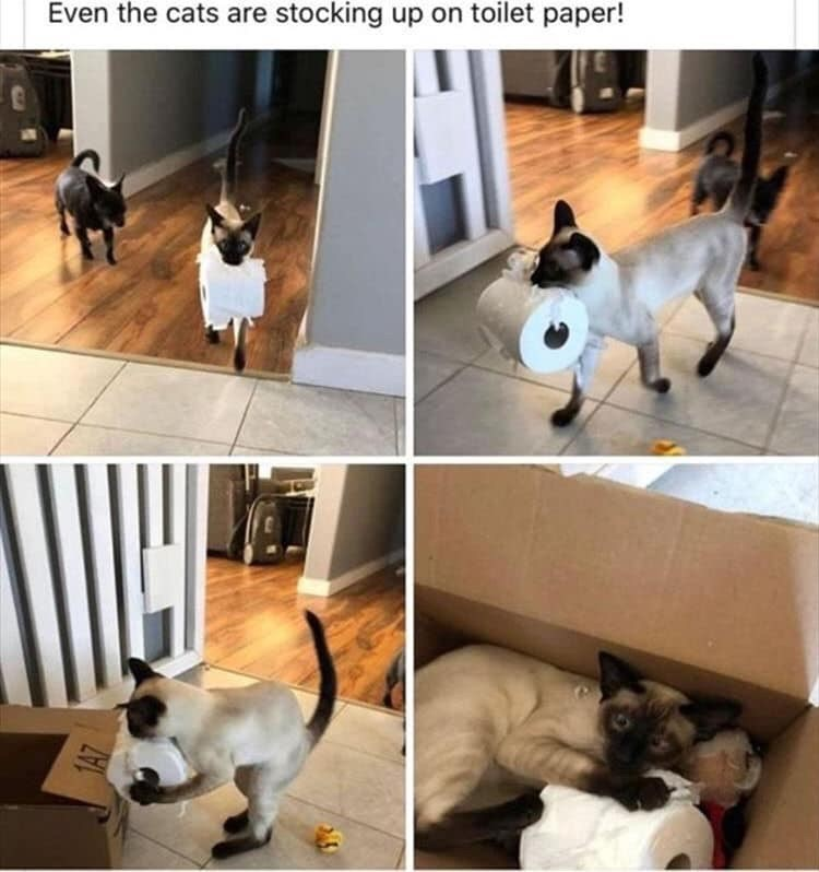 Photograph - Even the cats are stocking up on toilet paper!