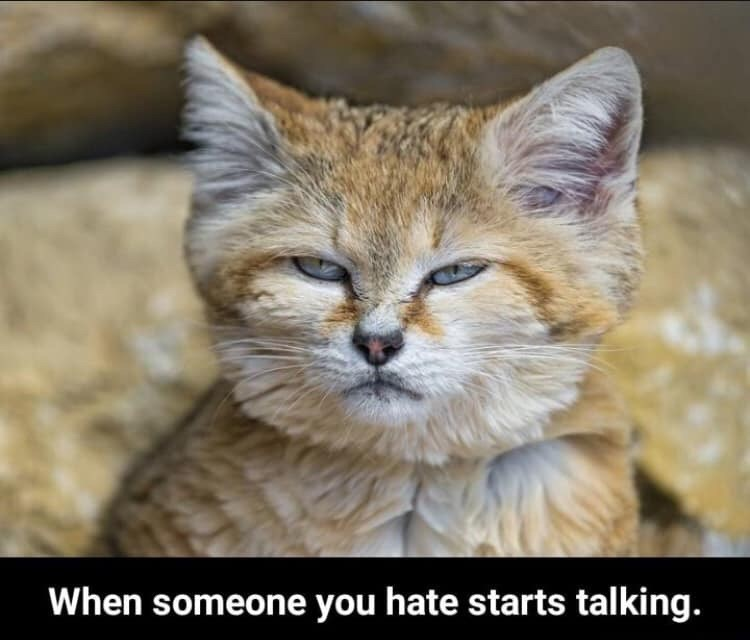 Cat - When someone you hate starts talking.