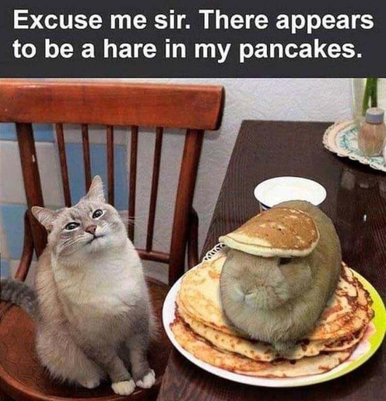 Cat - Excuse me sir. There appears to be a hare in my pancakes.