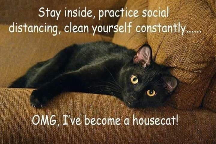 Cat - Stay inside, practice social distancing, clean yourself constantly.. OMG I've become a housecat!
