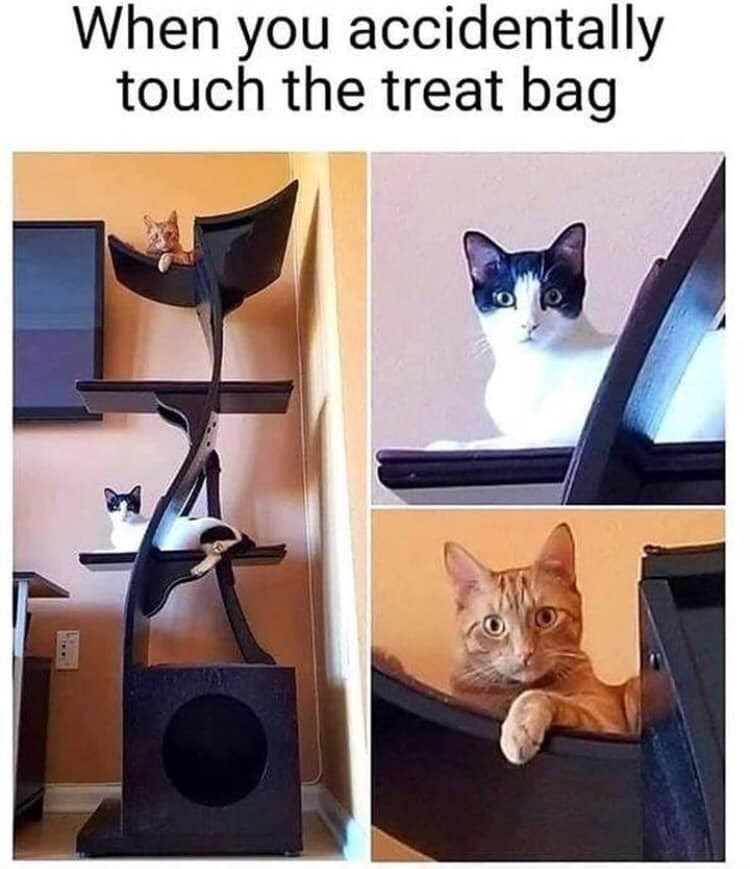 Cat - When you accidentally touch the treat bag