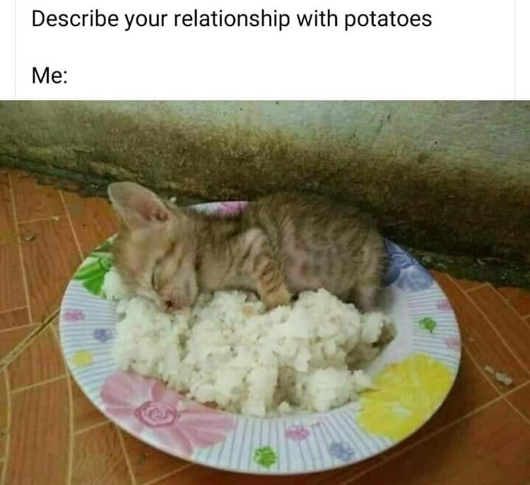 Cat - Describe your relationship with potatoes Me: