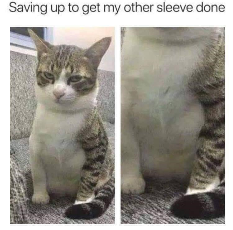Cat - Saving up to get my other sleeve done