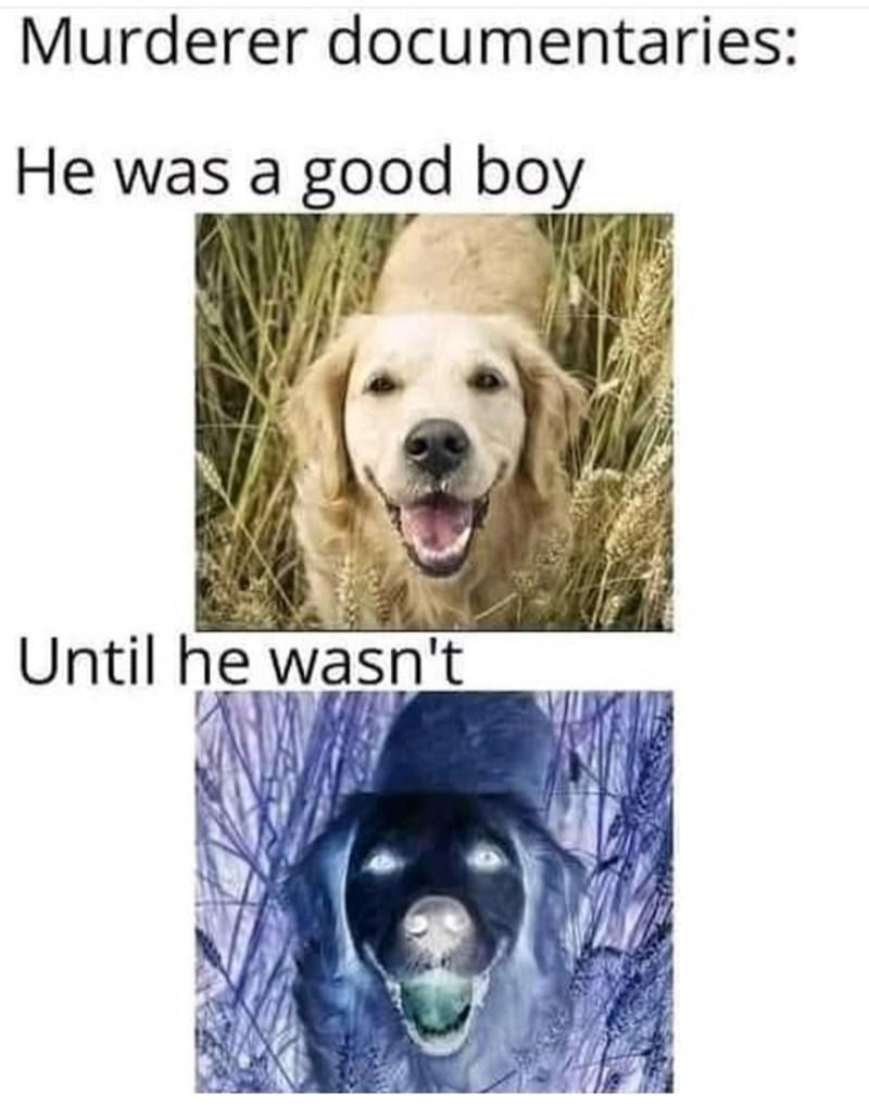 Dog - Murderer documentaries: He was a good boy Until he wasn't