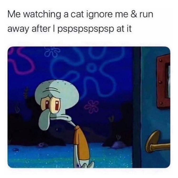 Rectangle - Me watching a cat ignore me & run away after I pspspspspsp at it