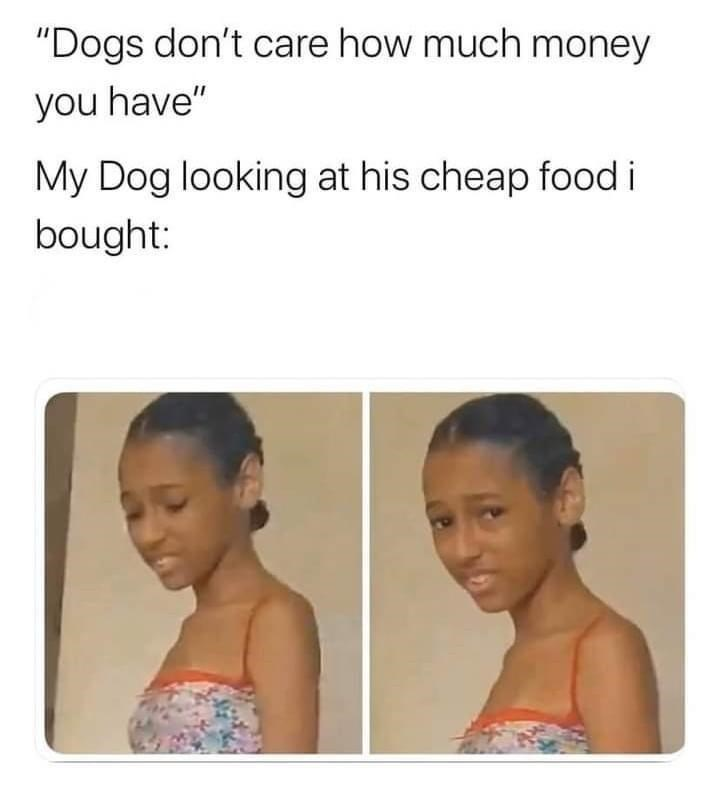 """Chin - """"Dogs don't care how much money you have"""" My Dog looking at his cheap food i bought:"""