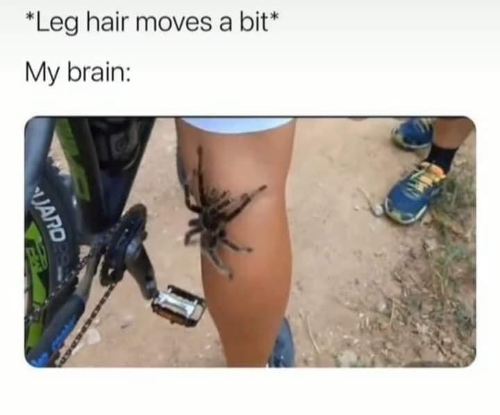 Thigh - *Leg hair moves a bit* My brain: JAND