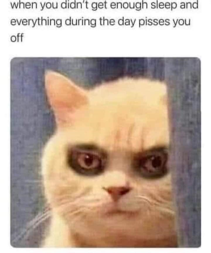 Cat - when you didn't get enough sleep and everything during the day pisses you off