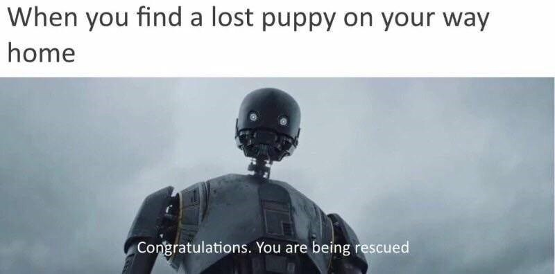 Helmet - When you find a lost puppy on your way home Congratulations. You are being rescued