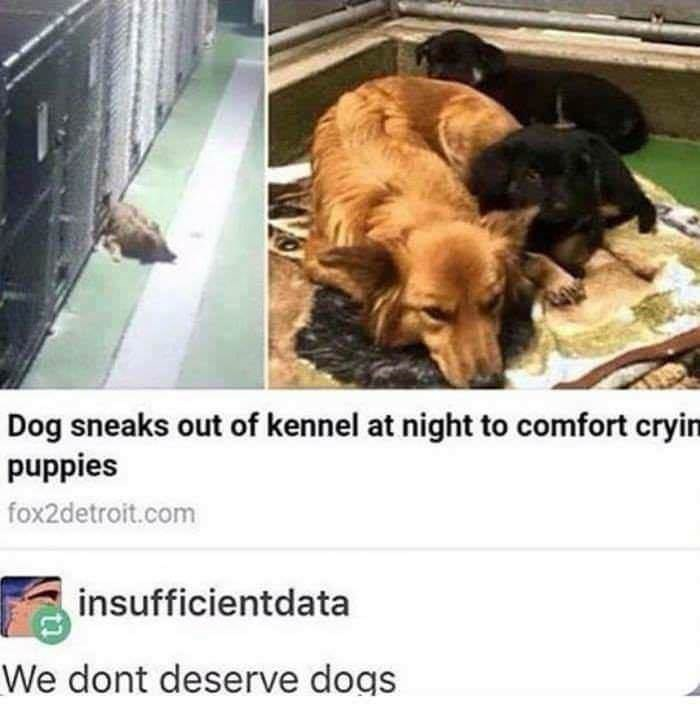 Dog - Dog sneaks out of kennel at night to comfort cryin puppies fox2detroit.com insufficientdata We dont deserve dogs