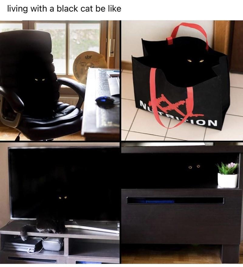 Shoe - living with a black cat be like sbr HON