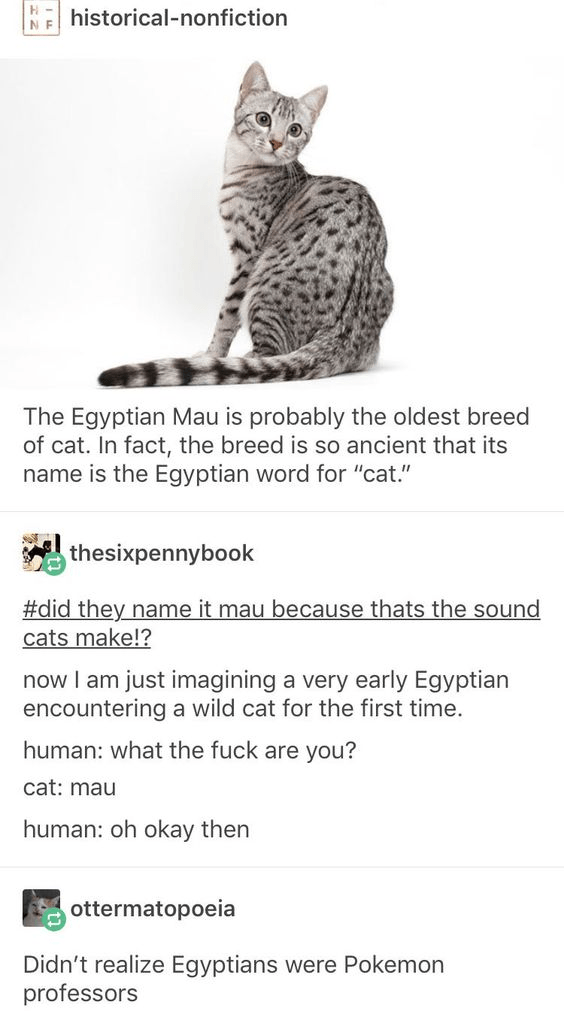 """Cat - historical-nonfiction The Egyptian Mau is probably the oldest breed of cat. In fact, the breed is so ancient that its name is the Egyptian word for """"cat."""" thesixpennybook #did they name it mau because thats the sound cats make!? now I am just imagining a very early Egyptian encountering a wild cat for the first time. human: what the fuck are you? cat: mau human: oh okay then ottermatopoeia Didn't realize Egyptians were Pokemon professors"""