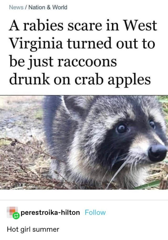 Carnivore - News / Nation & World A rabies scare in West Virginia turned out to be just raccoons drunk on crab apples perestroika-hilton Follow Hot girl summer