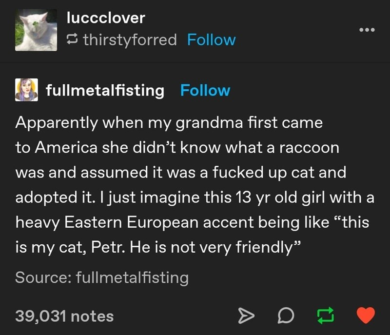 """Font - luccclover 5 thirstyforred Follow fullmetalfisting Follow Apparently when my grandma first came to America she didn't know what a raccoon was and assumed it was a fucked up cat and adopted it. I just imagine this 13 yr old girl with a heavy Eastern European accent being like """"this is my cat, Petr. He is not very friendly"""" Source: fullmetalfisting 39,031 notes A"""