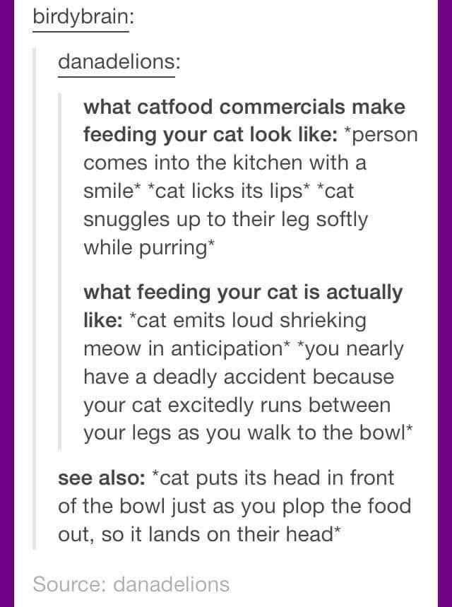 Font - birdybrain: danadelions: what catfood commercials make feeding your cat look like: *person comes into the kitchen with a smile* *cat licks its lips* *cat snuggles up to their leg softly while purring* what feeding your cat is actually like: *cat emits loud shrieking meow in anticipation* *you nearly have a deadly accident because your cat excitedly runs between your legs as you walk to the bowl* see also: *cat puts its head in front of the bowl just as you plop the food out, so it lands o