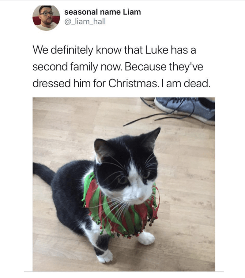 Cat - seasonal name Liam @_liam_hall We definitely know that Luke has a second family now. Because they've dressed him for Christmas. I am dead.