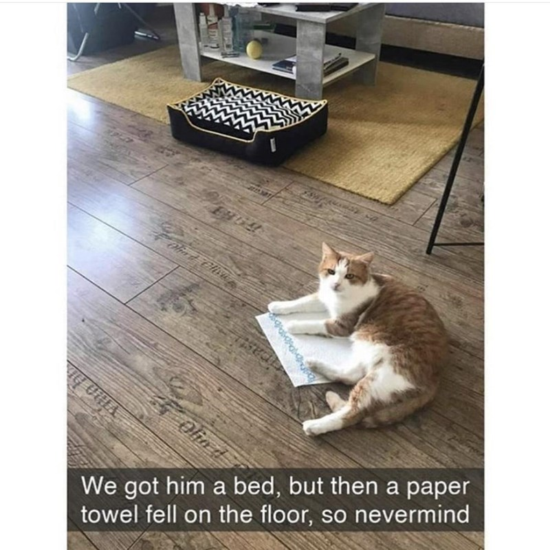 Cat - Olin d We got him a bed, but then a paper towel fell on the floor, so nevermind