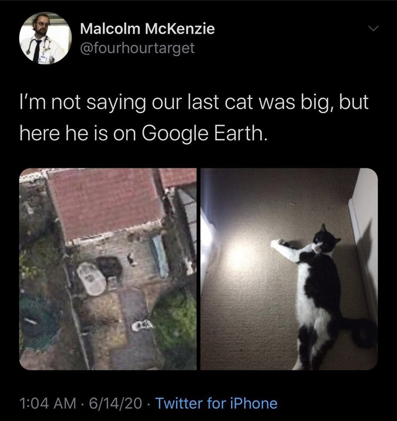 Light - Malcolm McKenzie @fourhourtarget I'm not saying our last cat was big, but here he is on Google Earth. 1:04 AM · 6/14/20 · Twitter for iPhone