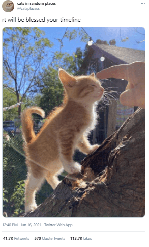 Cat - cats in random places @catsplacess rt will be blessed your timeline 12:40 PM- Jun 16, 2021 Twitter Web App 41.7K Retweets 570 Quote Tweets 113.7K Likes