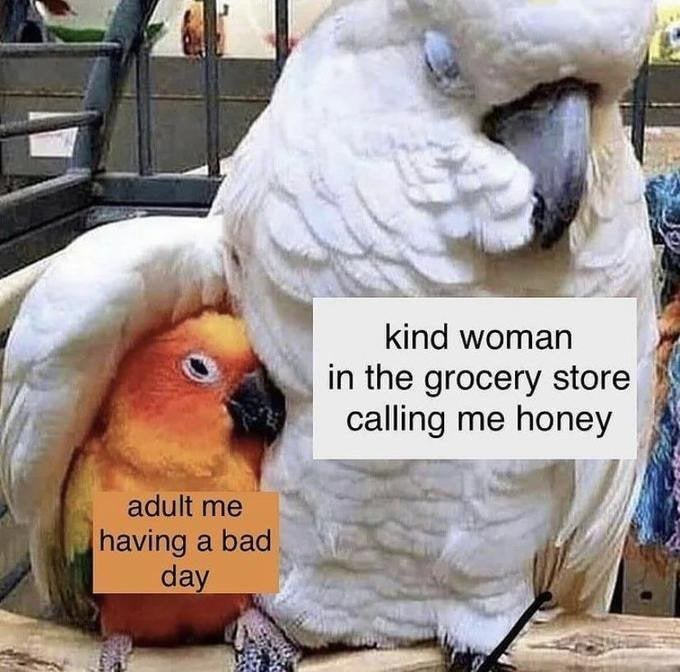 Beak - kind woman in the grocery store calling me honey adult me having a bad day