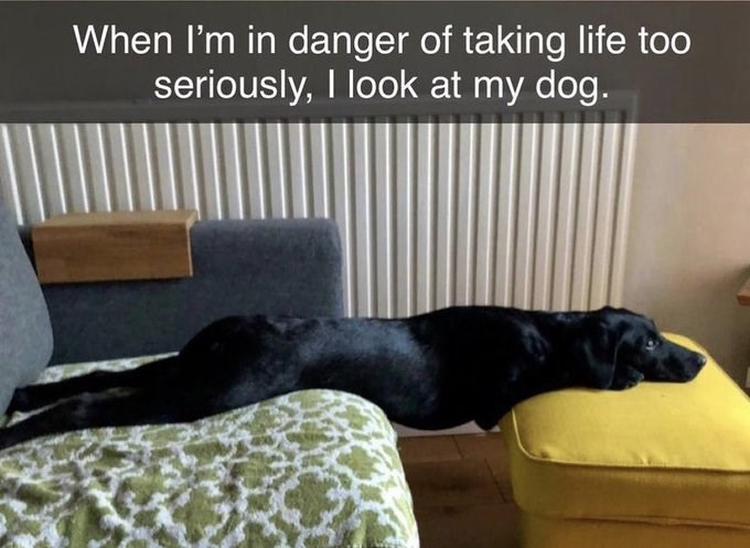 Dog - When I'm in danger of taking life too seriously, I look at my dog.