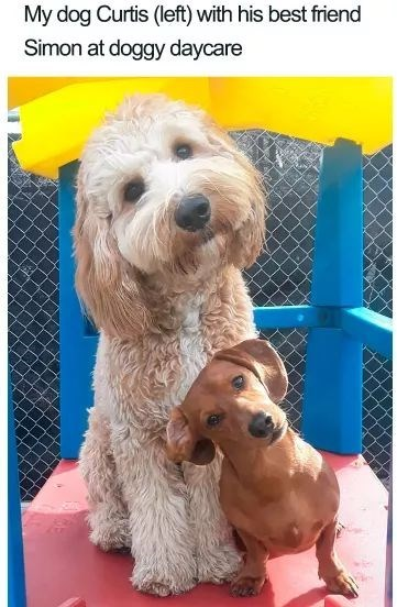 Dog - My dog Curtis (left) with his best friend Simon at doggy daycare