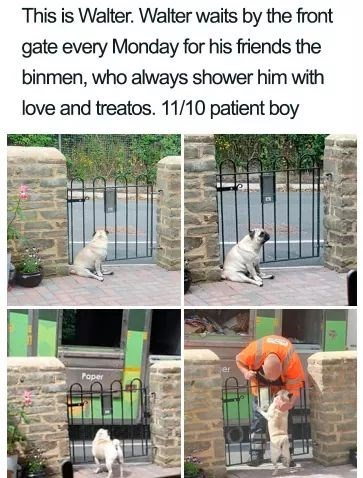 Property - This is Walter. Walter waits by the front gate every Monday for his friends the binmen, who always shower him with love and treatos. 11/10 patient boy Paper