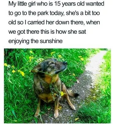 Dog - My little girl who is 15 years old wanted to go to the park today, she's a bit too old so I caried her down there, when we got there this is how she sat enjoying the sunshine